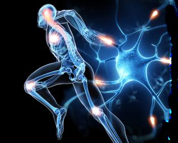 neuron-man